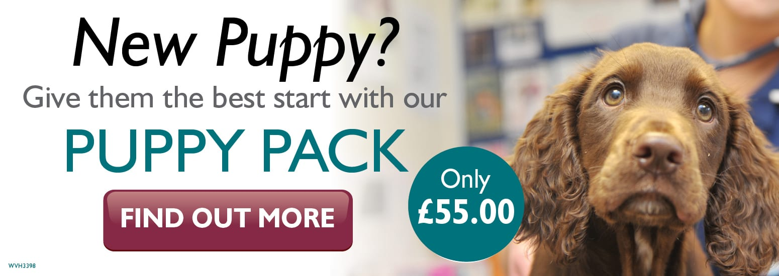Puppy Pack covering puppy injections, flea & worm treatment, and much more for only £55 at vets in West Kirby