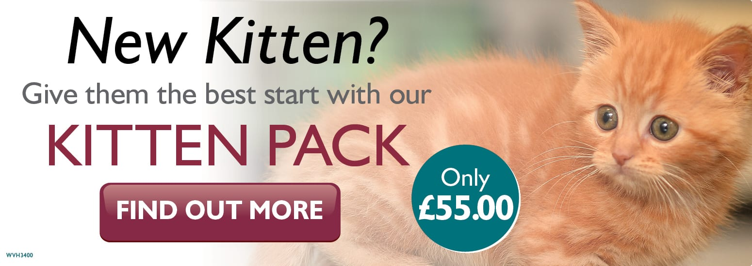 Kitten Pack covering kitten injections, flea & worm treatment, and much more for only £55 at vets in West Kirby